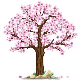 fase follicolare - primavera