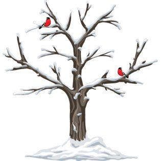 fase mestruale - inverno